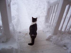Dorian on Porch